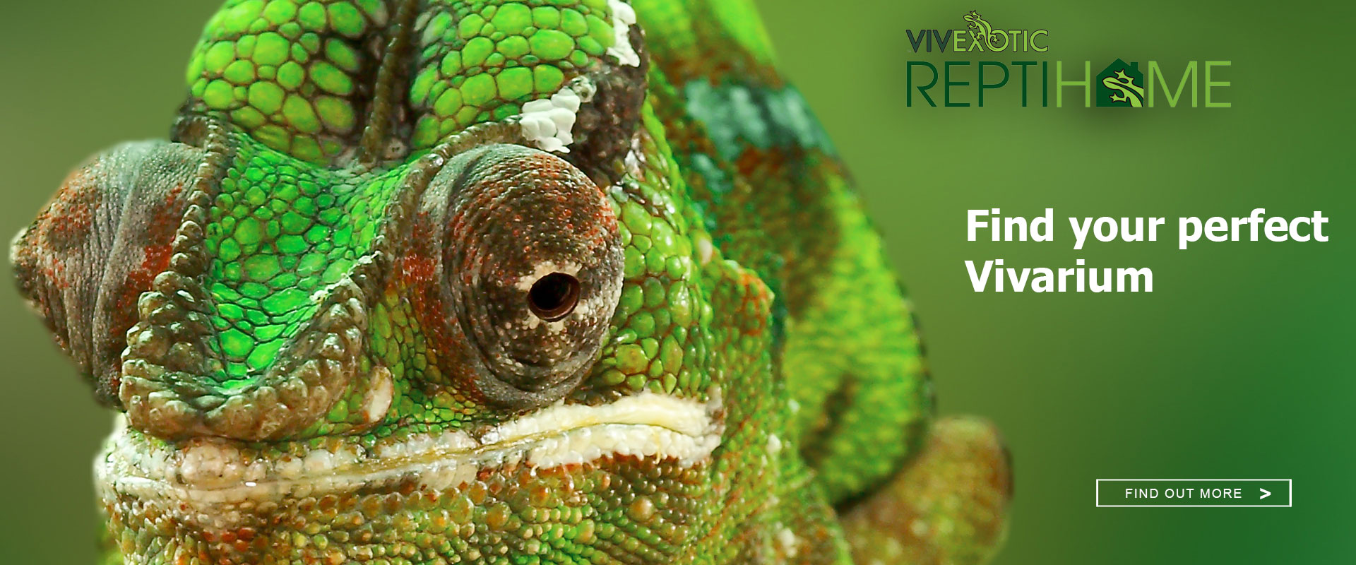 Reptile Pet Stores Near Me